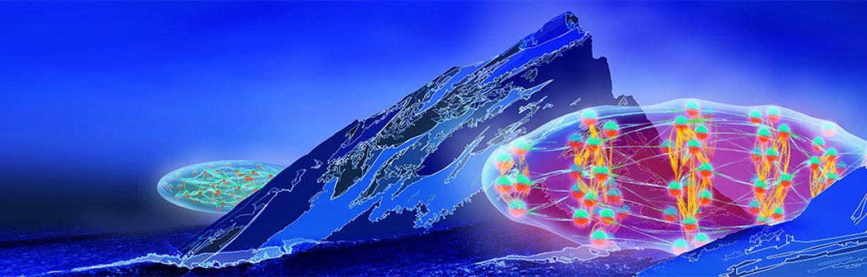 Observation of roton quasiparticles in Erbium
